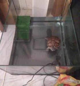 Террариум с черепахой красноухой