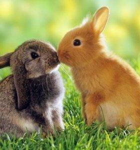 Продажа кроликов Шиншил и Калифорнии
