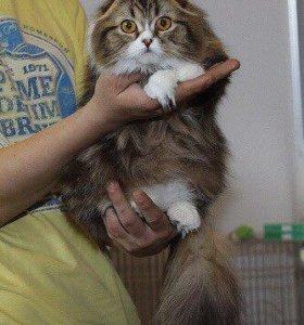 Бесплатно кошка фолд