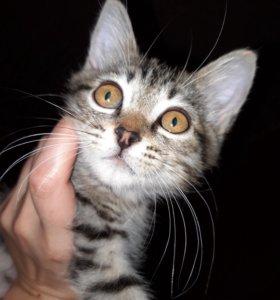 Отдам котика в добрые руки