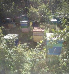 Мёд продам