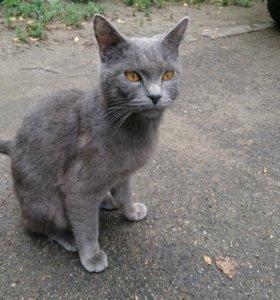 Кот ищет старого или нового хозяина