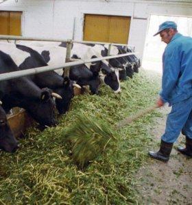Главный ветеринарный врач (молочное животноводство)