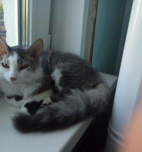 Кот и 2 кошки