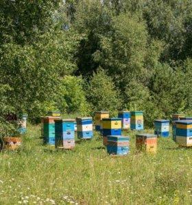 Мёд липовый натуральный