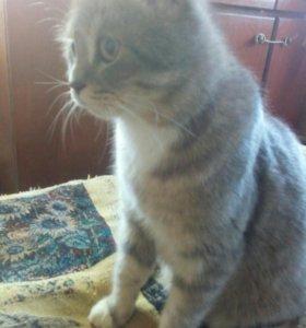 Продам котят от британской кошечки