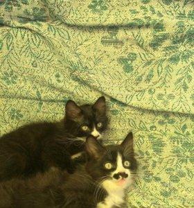 Кошечка и кот. Родились 11.05. Возможна доставка.