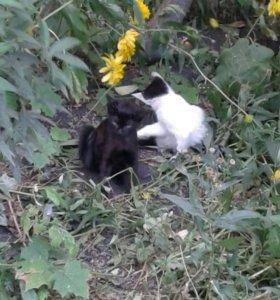 Малышки  и тигренок ищут дом