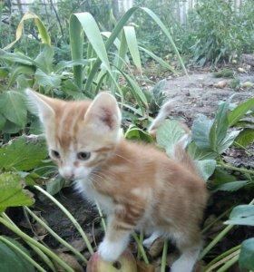 Котята! Озорные тигрята ищут заботливых хозяев