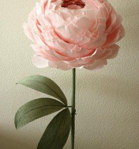 Ростовые цветы| Огромные цветы | Большие цветы
