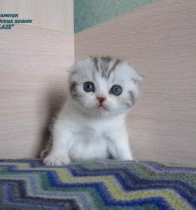Вислоухие плюшевые котята (документы)