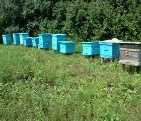Породам мёд натуральный гречишный урожай 2018 года