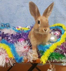 Декоративный кролик с полным комплектом