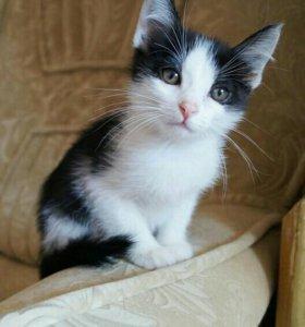 Котята из котодетсада