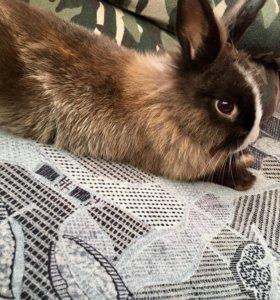 Декоративный маленький кролик