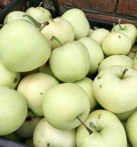 Яблоки Белый Налив С дачи