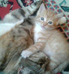 Котенок 1мес