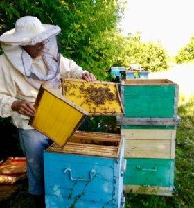 Мед, воск пчелиный с собственной пасеки