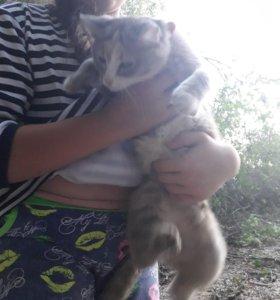 Отдам кошку в хорошие руки.