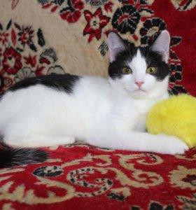 Котенок в добрые руки Дори, кошка в дар