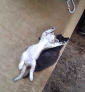 Котята игривые