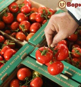 Фасовщик на склад овощей