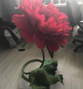 Ростовой, большой цветок (пион)