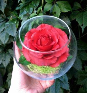 Роза в колбе. Полимерная глина. Ручная работа