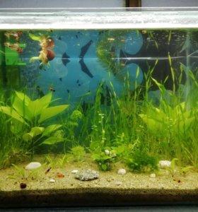 Аквариумные растения, рыбки