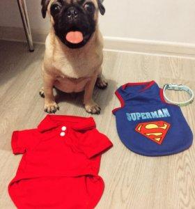 Футболка для собаки