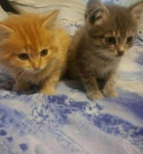 Котята девочка и мальчик.