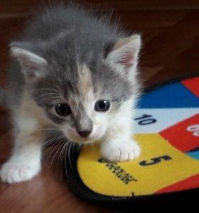Печной домашний котик. 1 месяц