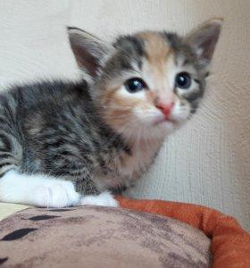Домашняя кошечка. 1 месяц