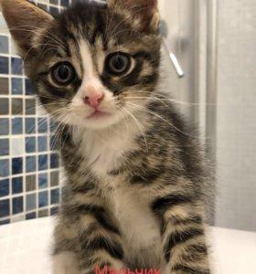 В добрые руки котёнок