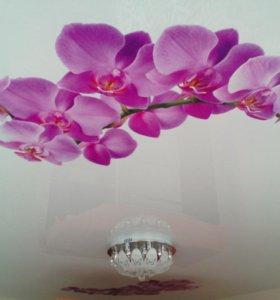 """Натяжной потолок """"Орхидея"""""""