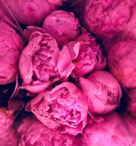 Букет пионов розовых купить спб