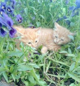 маленькие рыжие кошачки ждут своих хозяев