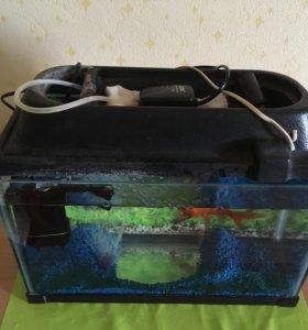 Золотая рыбка с аквариумом