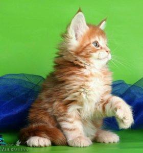 Котики полидакты