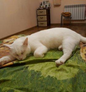 Бесплатно домашний кот пацан кастрированный