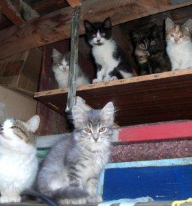 Отдам котят (мальчики)
