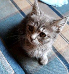 Кошка Китти