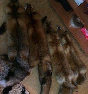 Шкуры лисы