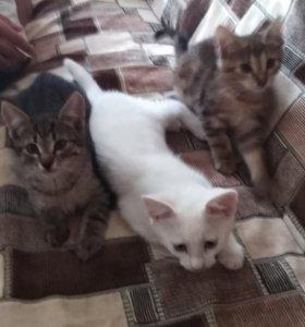 Котята красавцы.