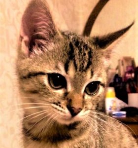 Кошка  МИЛаШКа 🎀   ищет дом!!!
