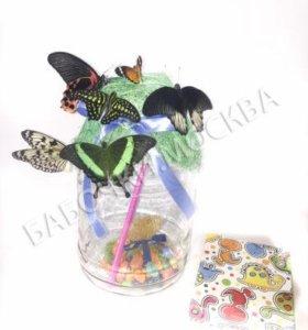 Домашняя ферма живых тропических бабочек
