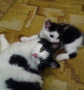 Котик ищет хозяина