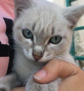 Кошечка 2,5 месяца