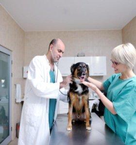 Ветеринарный врач хирург/ травматолог