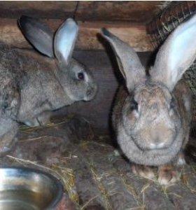 Кролики (разных пород)